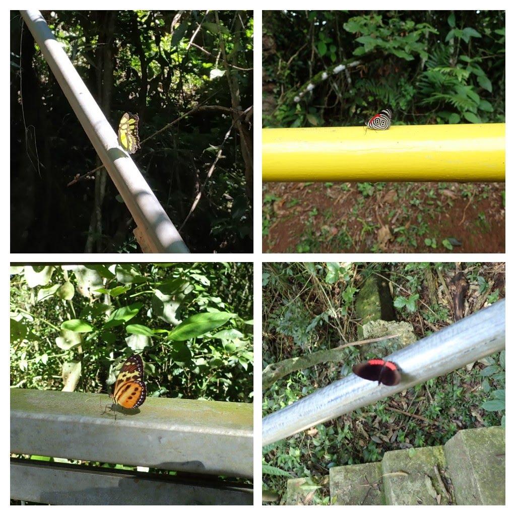 butterflies Iguazú