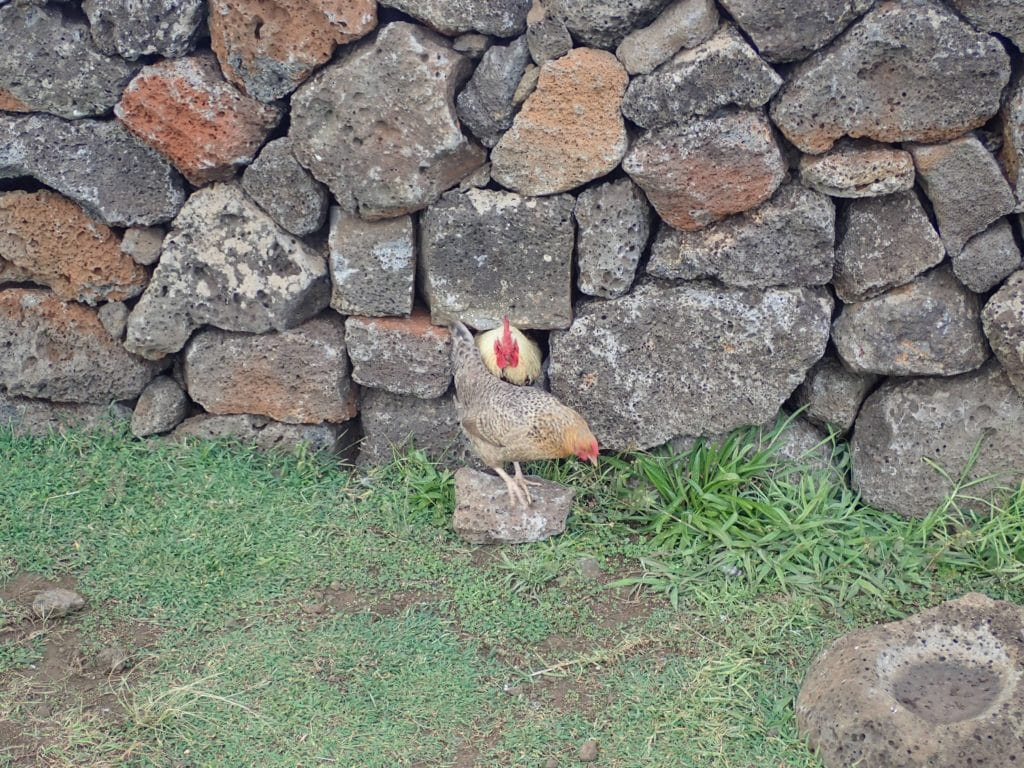 Henhouse Rapa Nui