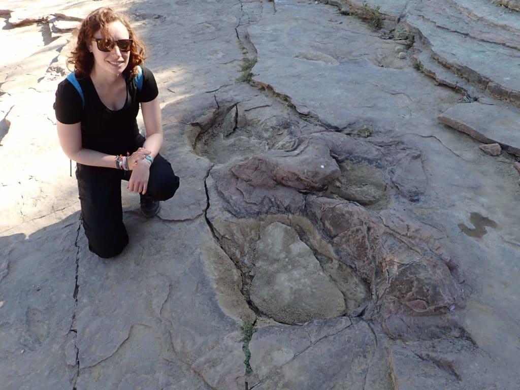 herbivore dinosaure empreinte