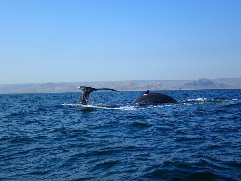 Balene Mancora