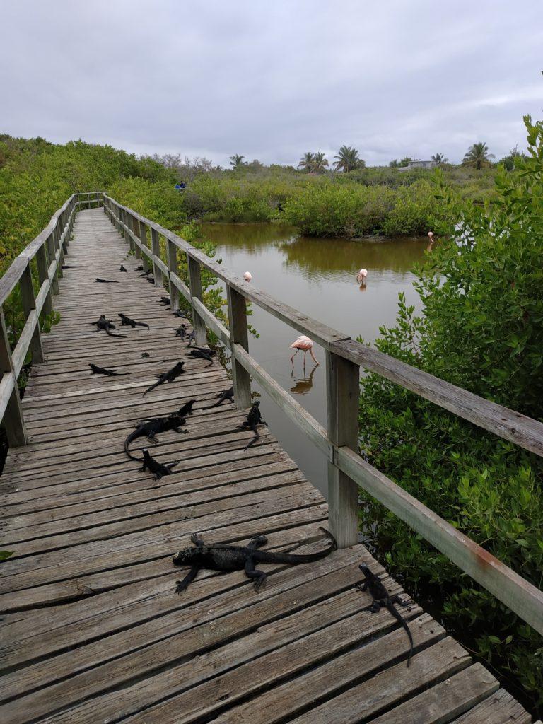 iguane e fenicotteri
