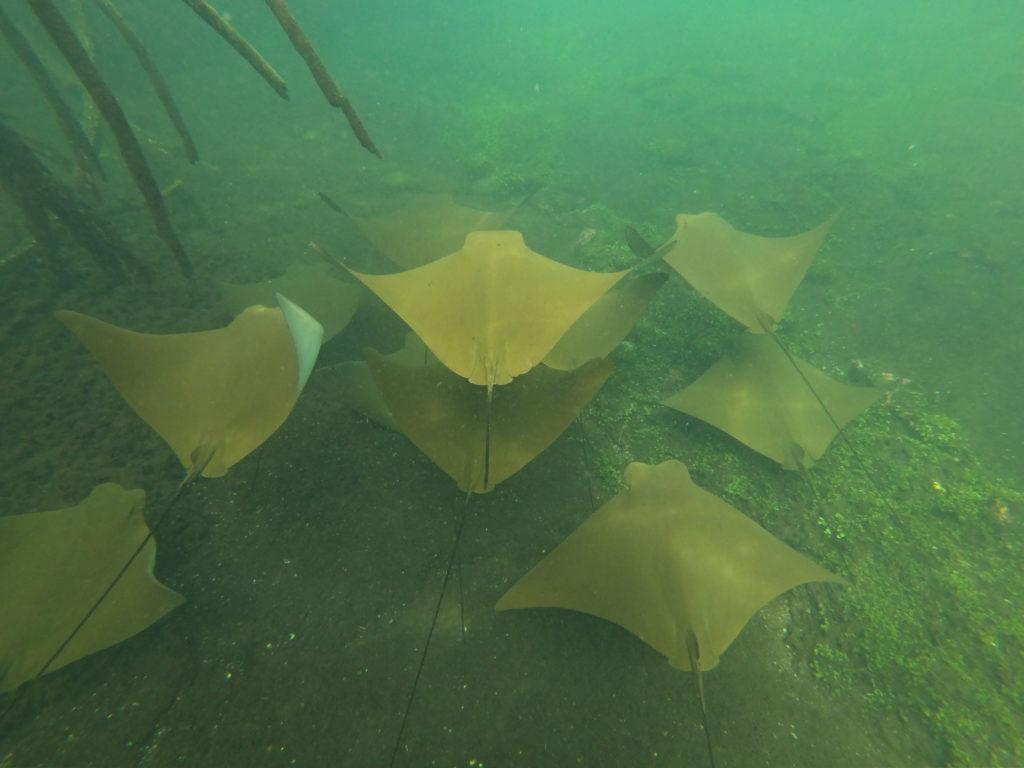 snorkeling Isabela