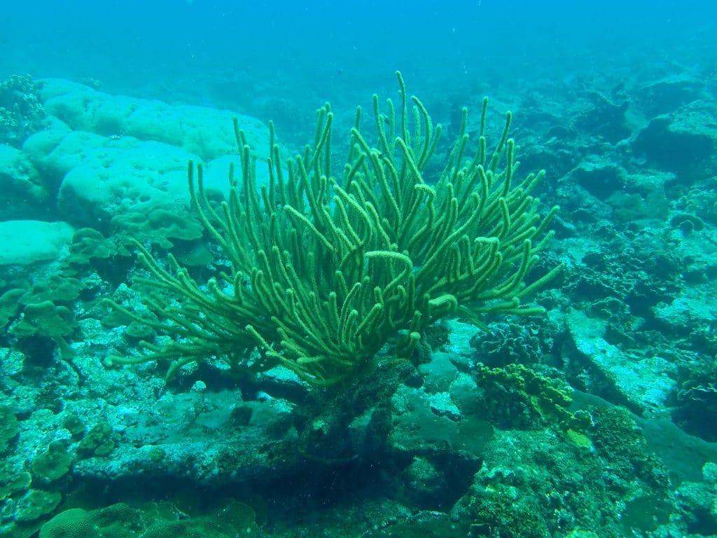 immersione coralli