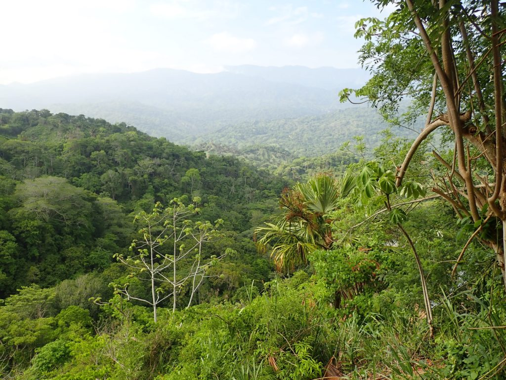 Tayrona jungle